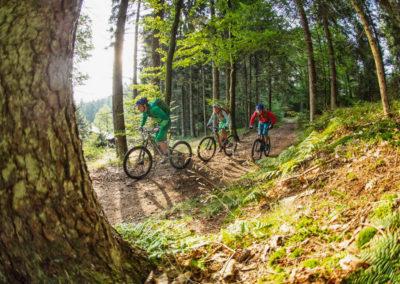 baum-trail