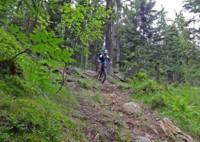 downhill-ines
