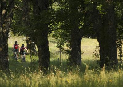 Revierguide Bayerischer Wald
