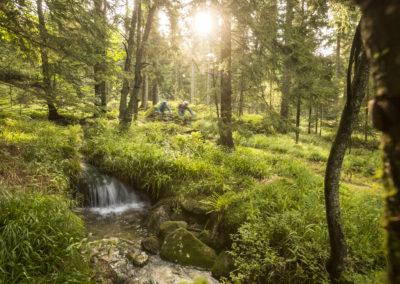 trail-an-bach
