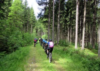trail-wald