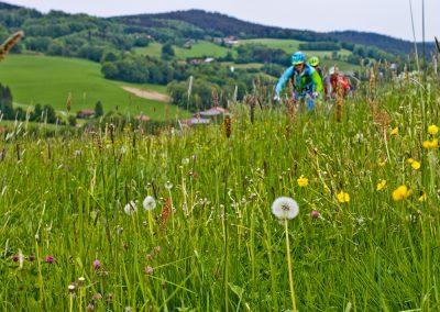 bayerische Wiesenlandschaft