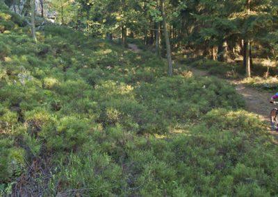 E-MTB Arberland Trails